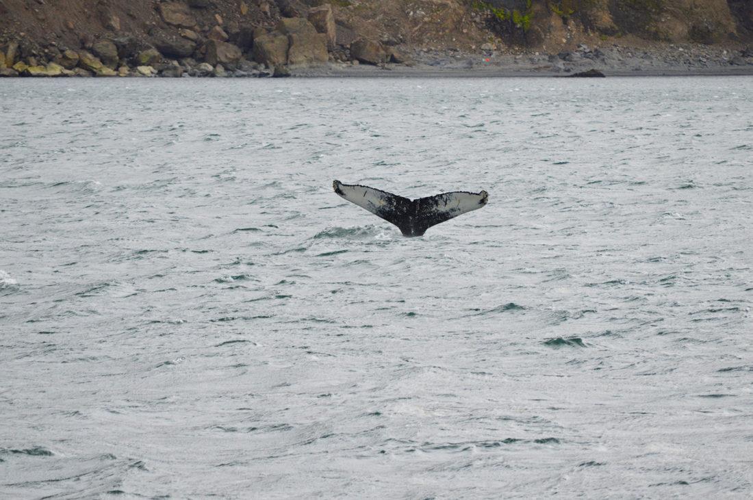 gay-couple-exploring-north-iceland-whale-watching-husavik-12