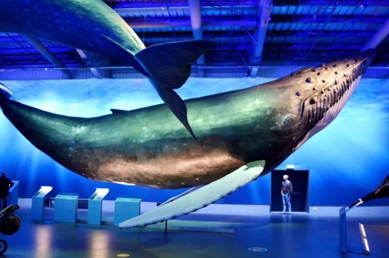 Impressive size of manmade whales | Gay Couple Travel City Weekend Reykjavik Iceland © Coupleofmen.com
