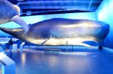 Biggest mammals of our world   Gay Couple Travel City Weekend Reykjavik Iceland © Coupleofmen.com