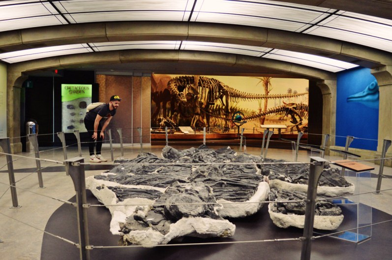 """The """"Triassic Giant"""", a 160 m2 specimen of the world's largest known marine reptile   Royal Tyrrell Museum Palaeontology Drumheller Alberta Canada © CoupleofMen.com"""