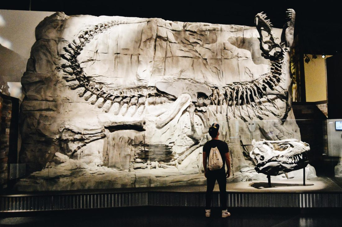 A real fossilized T-Rex Skeleton | Dinosaurs at Royal Tyrrell Museum in Drumheller, Alberta © CoupleofMen.com