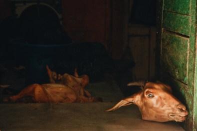 A Goats Head in Butchery in Kathmandu   Gay Travel Nepal Photo Story Himalayas © Coupleofmen.com
