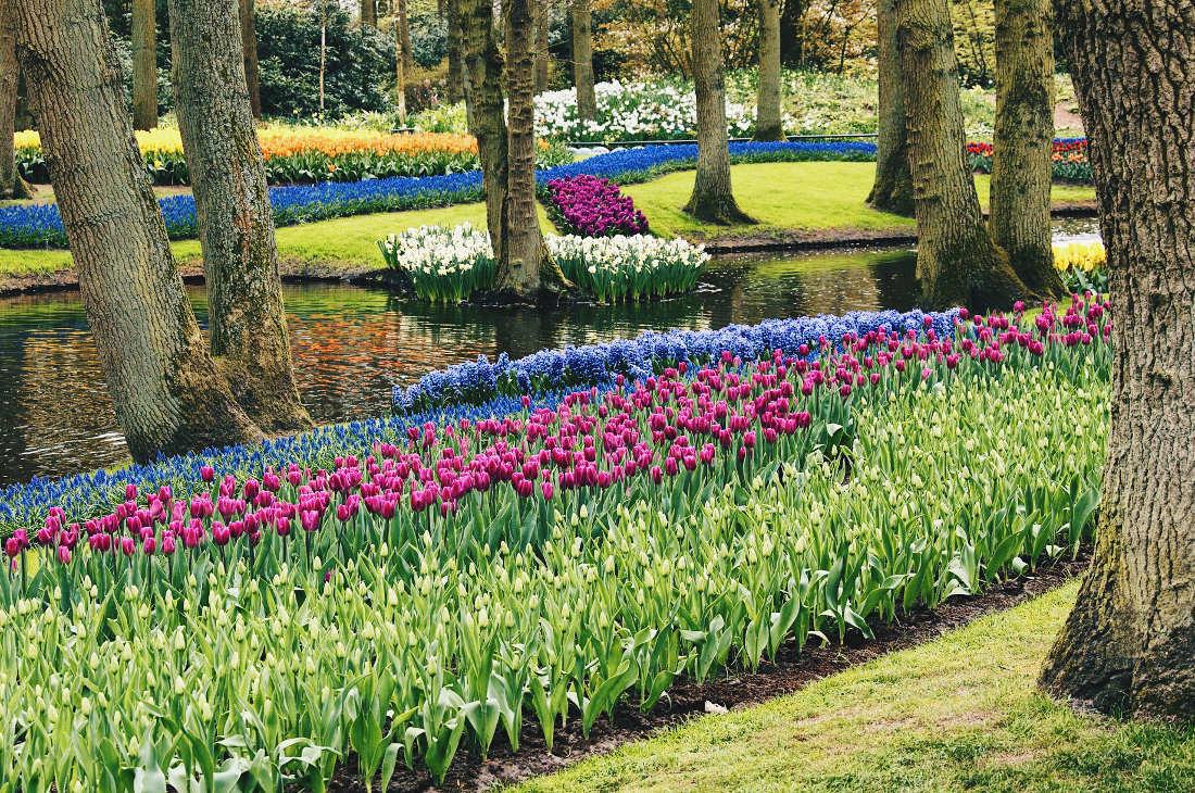 Flower park Kuekenhof at its best   Keukenhof Tulip Blossom Holland