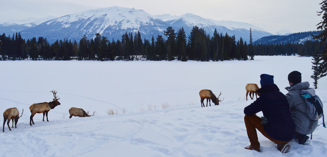 Gay couple watching a herd of Wapitis at Beauvert Lake | Winter Road Trip Alberta Highlights Canadian Rocky Mountains © Coupleofmen.com