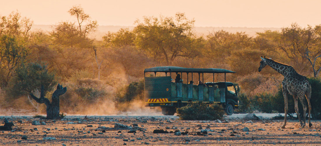 Game Drive Car during Sunset watching a Giraffe from close-by at Etosha National Park Namibia © Coupleofmen.com