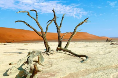 Dead black Acacia trees of Deadvlei © Coupleofmen.com