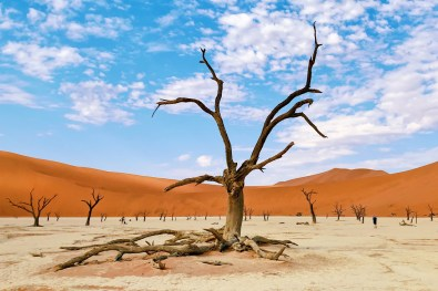 One of our favorite dead black Acacia trees of Deadvlei © Coupleofmen.com