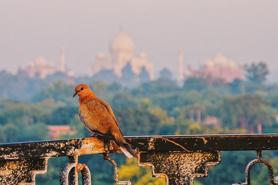 Gay Reise Indien Bird sitting on the rooftop terrace in front of the Taj Mahal © Coupleofmen.com