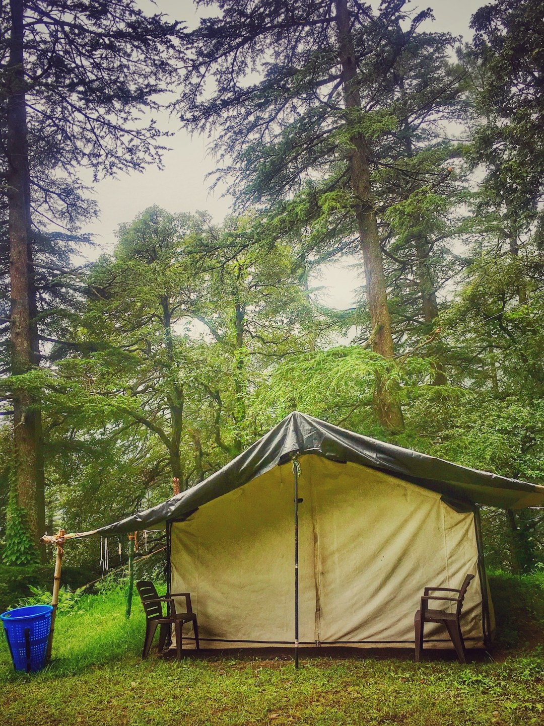 camp-fairview-shimla-review
