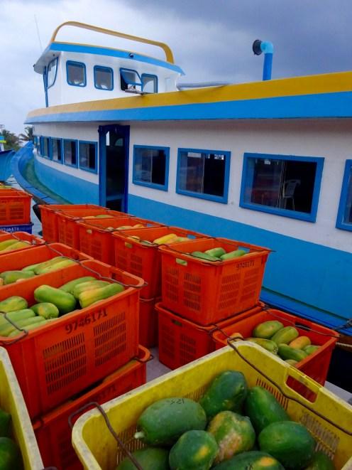Papaya packed for transportation