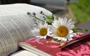 daisies, book, read