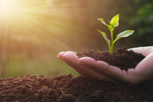 Image of a person holding a small plant. Your relationship can get the fresh start it deserves with marriage counseling in Cincinnati, Oh 45226