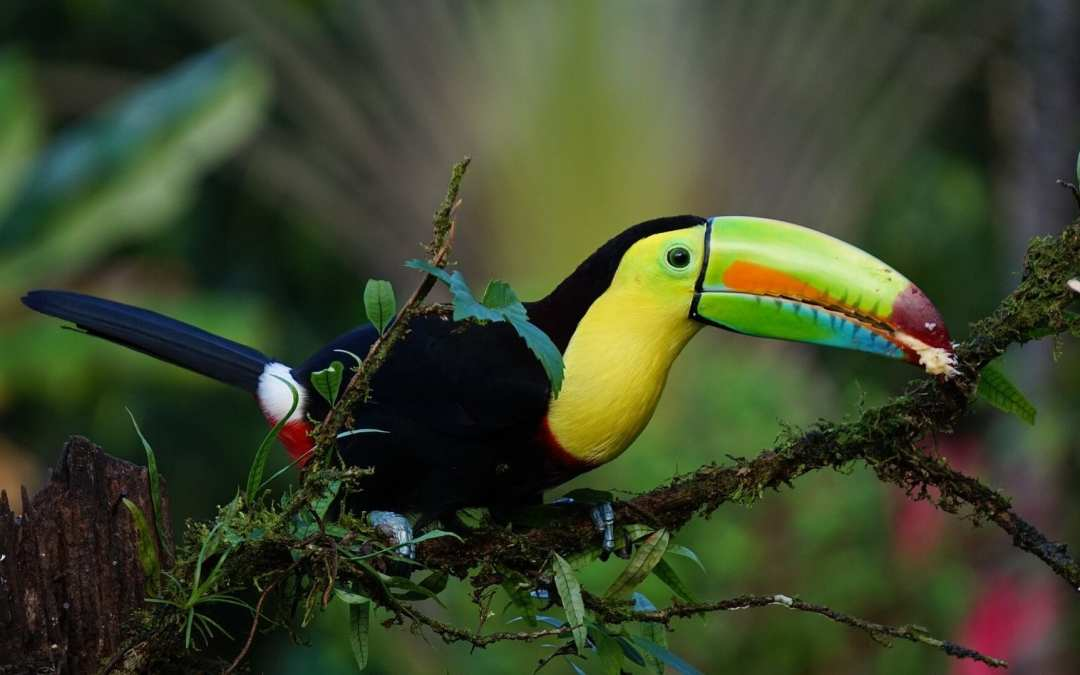 Why travel to Costa Rica on your next vacation