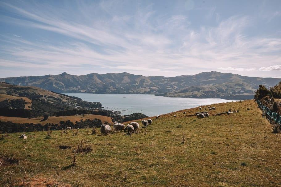 Akaroa-Heritage-Park, Akaroa, Things-to-do-Akaroa, Akaroa-Instagram, Akaroa-New-Zealand, Akaroa-Christchurch, Christchurch-day-trip, south-island-road-trip-itinerary, 2-week-new-zealand-itinerary, 7-day-south-island-itinerary
