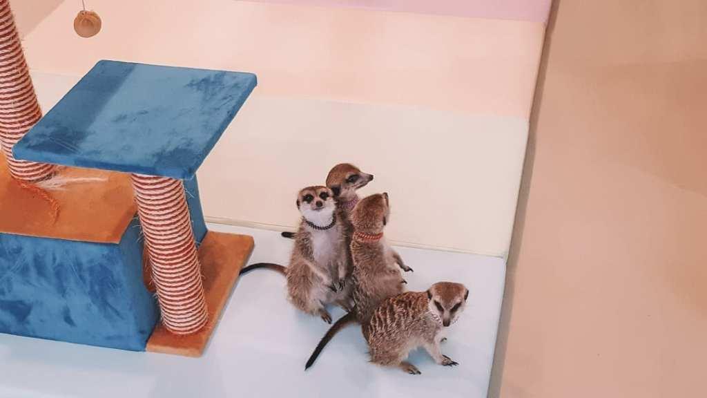 Our meerkat friends