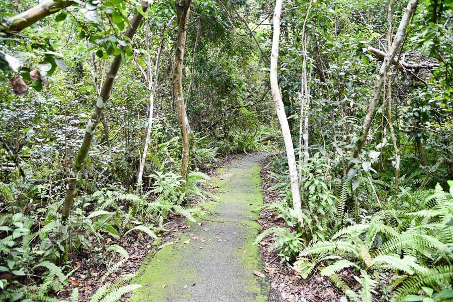 Everglades-national-park-trails