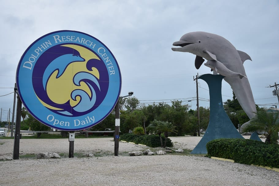 things-to-do-in-marathon-fl-dolphin-research-centre