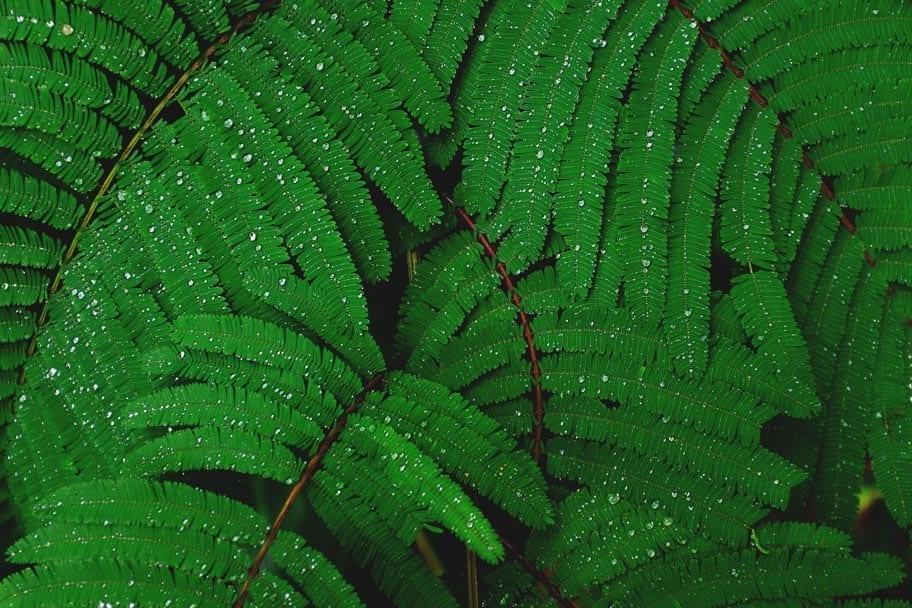 Big-Bog-Maui-Hawaii-rainfall