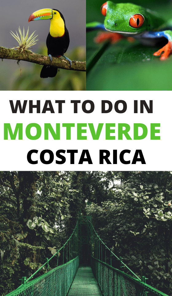 The best things to do in monteverde costa rica including the cloud forest, restaurants, photography and how to get from san jose to monteverde. See this guide for why you should travel to costa rica on your next vacation. #monteverde #costarica #sanjose #costaricatravel