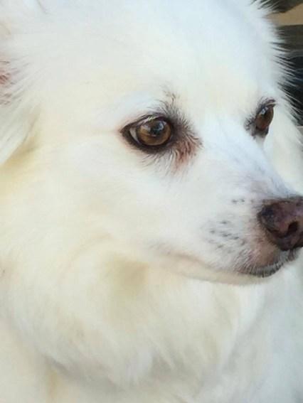 IAMS™ ProActive Health™ Dog Food available at Dollar General #spon #ad