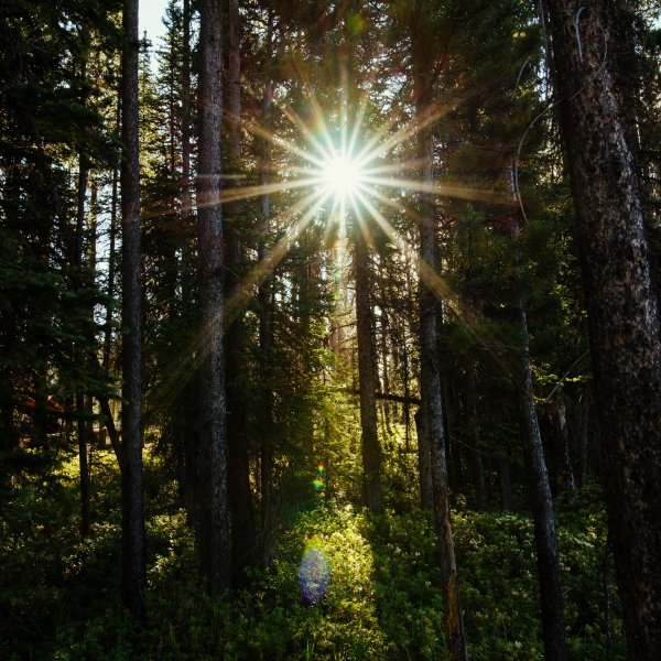 Photo of the the suns light shining through a mountain of trees taken by jamie hubbs