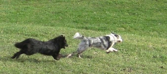Courir avec son chien, le canicross !