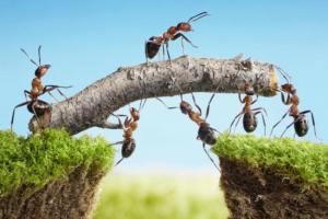 7 verschillen tussen een groep en een team