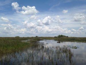 Everglades Miami Floride
