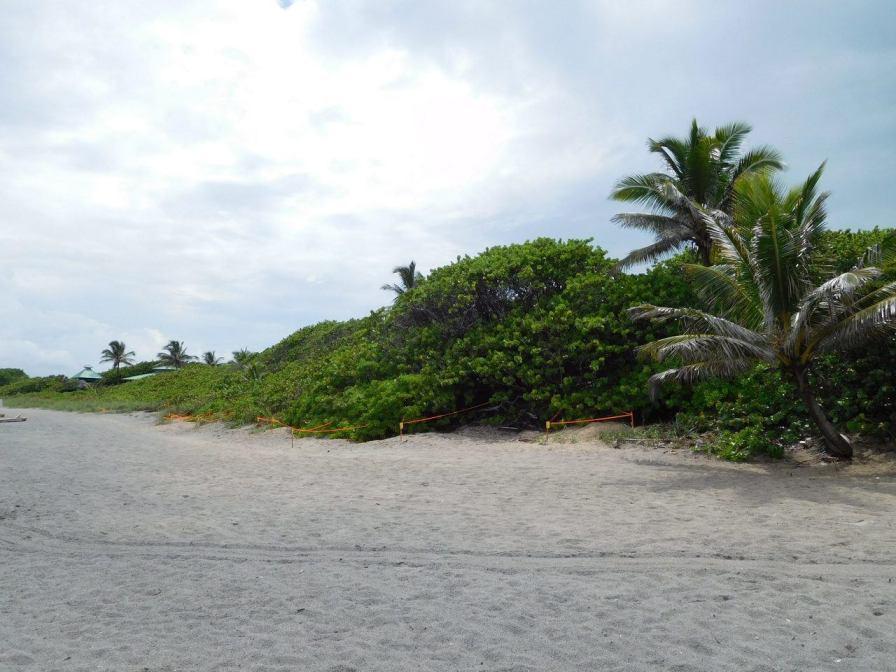 Plage de Red Reef - Mangrove - Boca raton - Floride