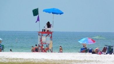 Photo of Visiter la baie de Tampa (Clearwater, St Petersburg, Tampa…) Guide de Voyage Floride