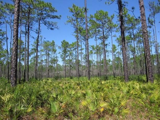Apalachicola Forest Floride