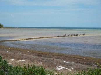 Oiseaux à Bahia Honda dans les îles Keys de Floride