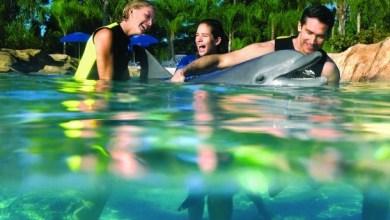 Photo of Un concert pour les dauphins à Palm Beach le 4 décembre