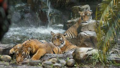 Photo of Le Zoo de Palm Beach : un must see en Floride !