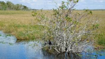 Flamingo Everglades national Park