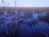 Pa-Hay-Okee (Flamingo -Everglades national Park)
