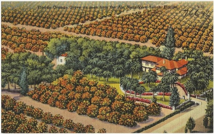 Carte postale des années 1930-1940 d'une plantation près de Véro Beach (photo : Boston Public Library - C BY 2.0)