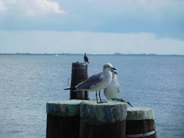 Oiseaux dans la baie de Biscayne, Villa Vizcaya, Miami - Floride