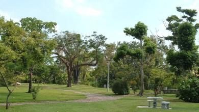 Photo of Le Guifford Arboretum (flore tropicale à Miami)