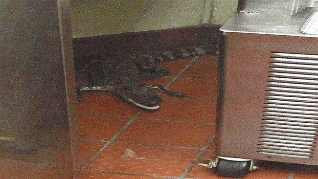 Il lance un alligator dans un fast food de Floride