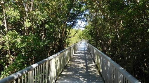 Mangrove de Boynton Beach