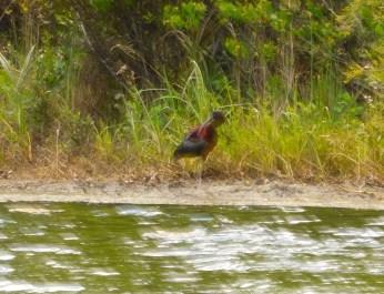 Oiseau à Riverbend Park / Jupiter / Floride