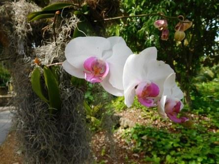 Orchidées aux Jardins Botaniques de Naples / Floride