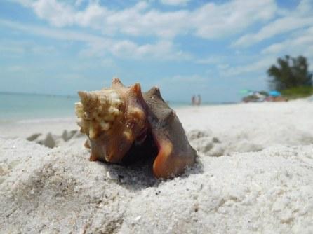 Coquillage sur la plage de Delnor-Wiggins Pass State Park à Naples Floride