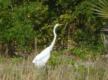 Oiseau à Port Salerno / Floride