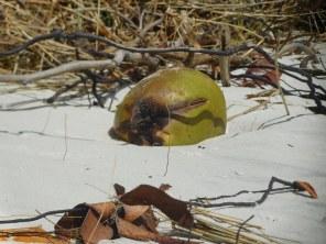 Plage sur l'Indian River à National Wildlife Refuge de Hobe Sound / Floride