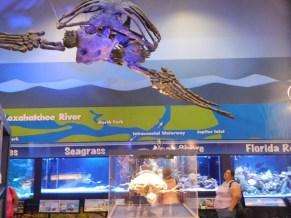 Loggerhead Marine Life Center à Juno Beach / Floride