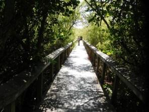 """""""Chemin des Bobcats"""" à Shark Valley / Parc National des Everglades"""