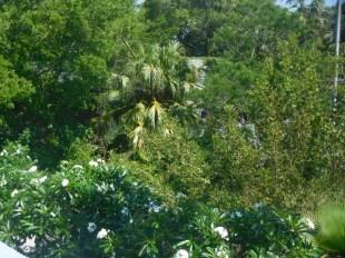 Centre Save our Seabirds sur Lido Key à Sarasota