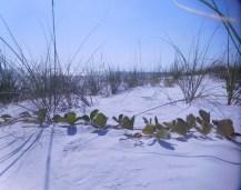 Plage de Lido Beach, sur l'île de Lido Key à Sarasota